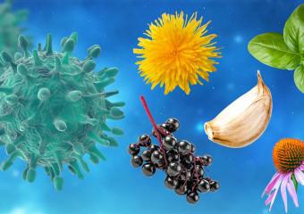 Противірусні фітопрепарати. 15 найкращих рослин, які допомагають боротися з вірусами