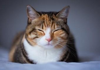 Мелатонін: безпечний спосіб позбутися безсоння