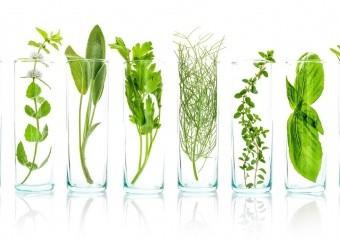 Які БАДи краще вживати ‒ виготовлені з цілих рослин чи з рослинних екстрактів?