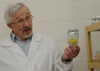 Фітопрепарати майбутнього розробляються в Інституті молекулярної біології і генетики НАН України у відділі професора Віктора Кунаха