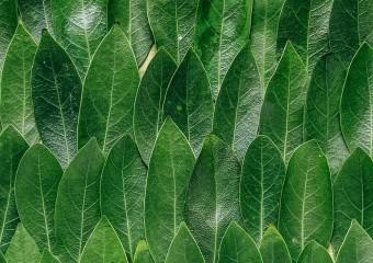 Які БАДи купувати ‒ з рослинних порошків чи з екстрактів?